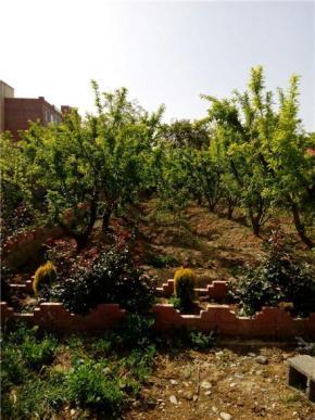 فروش باغ در سهیلیه چهار باغ  600 متر