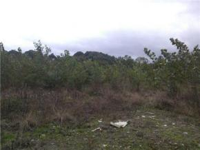 فروش زمین در سیاهکل 20000 متر
