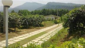 فروش باغ در عباس آباد متل قو 100000 متر