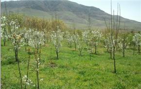فروش باغ در زیدشت طالقان  2000 متر