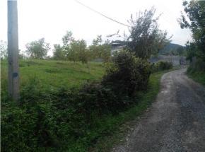 فروش زمین در تنکابن سلیمان آباد 1200 متر