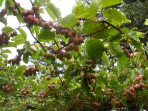 فروش باغ در تنکابن زنگ شاه محله 2450 متر