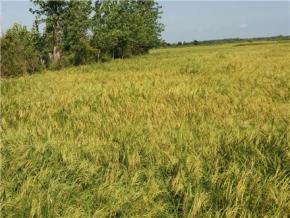 فروش زمین در رشت لشت نشا 3000 متر