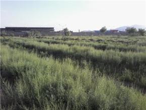 فروش زمین در کرمان 5000 متر