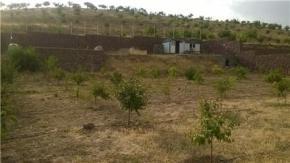 فروش باغ در آبسرد دماوند  1250 متر