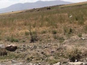 فروش زمین در شریف اباد تهران  60000 متر