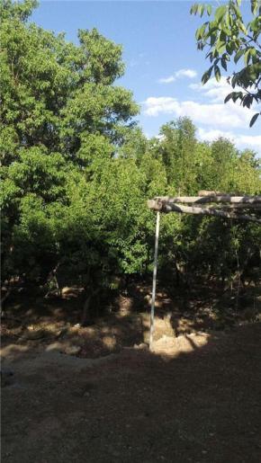 فروش باغ در اقلید 2000 متر