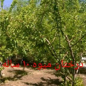 فروش زمین در مشهد سه راه فردوسی 600 متر