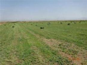 فروش زمین در نظر آباد 8000 متر