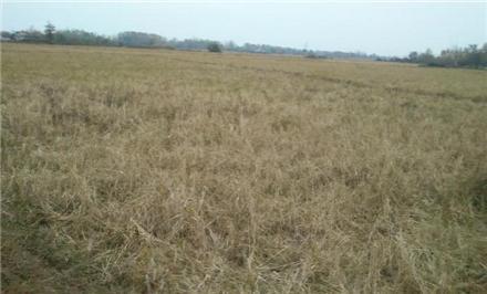 فروش زمین در رشت لشت نشا 2450 متر