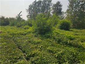 فروش زمین در آستانه اشرفیه تجن گوکه 2050 متر