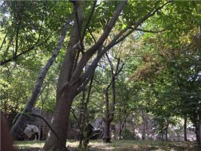 فروش باغ در دهستان سرا دماوند  550 متر
