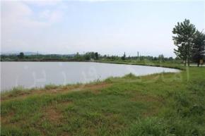 فروش زمین در رشت لاکانشهر 82000 متر