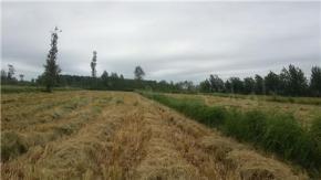 فروش زمین در صومعه سرا محدوده یکی از روستاها 41000 متر
