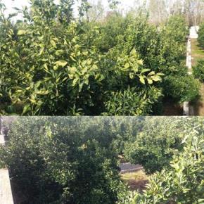 فروش باغ در آمل هزار سنگر 1100 متر