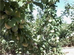 فروش باغ در زعفرانیه چهار باغ  1000 متر