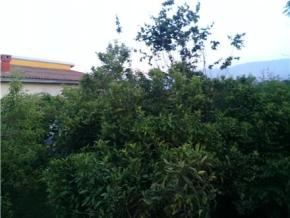 فروش ویلا در نور بهدشت 460 متر