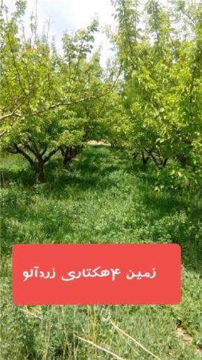 فروش باغ در شاهرود روستای ابر 140000 متر