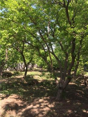 فروش زمین در شهرک کردزار شهریار  1000 متر