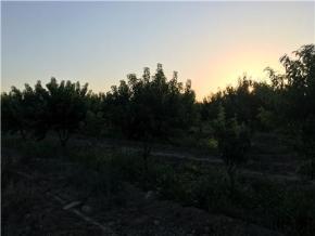 فروش باغ در مشهد جاده قوچان 1000 متر