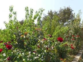 فروش باغ در نجف آباد قلعه سفید 1630 متر