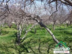 فروش باغ در شهریار شهریار  1000 متر