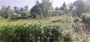 فروش زمین در لنگرود حاجی سرا 5000 متر
