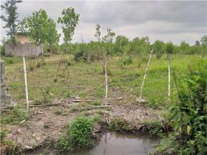 فروش زمین در لاهیجان بازکیا گوراب 2000 متر