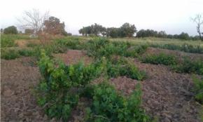 فروش باغ در آبیک شهرک قشلاق 700 متر