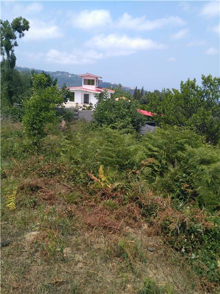 فروش زمین در رامسر دالخانی 430 متر