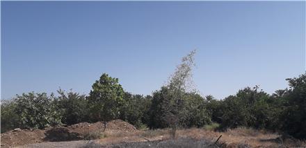 فروش زمین در رودان جغین بجگوئیه 170000 متر